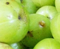 Amla and its greatness